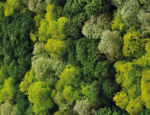 Il verde nei luoghi di lavoro